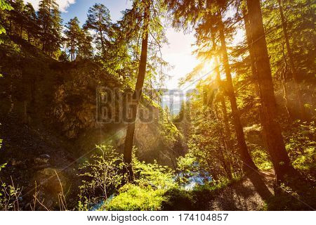 Green forest with sunrays in summer. With lens flare and light leak