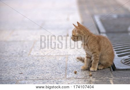 Little brown cat in the street, cat in street on sunny day,wild cat, small brown kitten outside,  curious cute little cat, small kitten playing in the street, Valletta, Malta