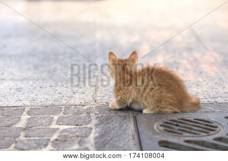 Little brown cat in the street, cat in street on sunny day, small brown kitten outside, curious cute little cat, small kitten playing in the street, Valletta, Malta.Space for text