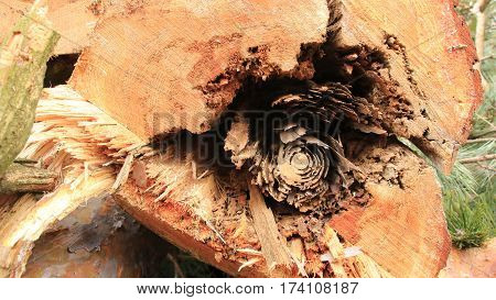 Wood rot in a trunk in the forest