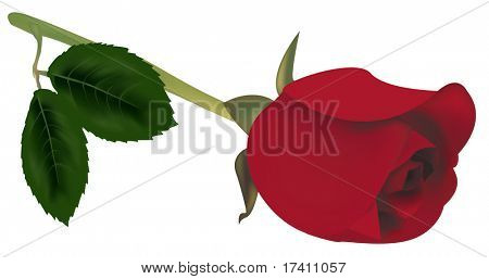 Photo-realistic vector illustration. Red rose with green leaves.