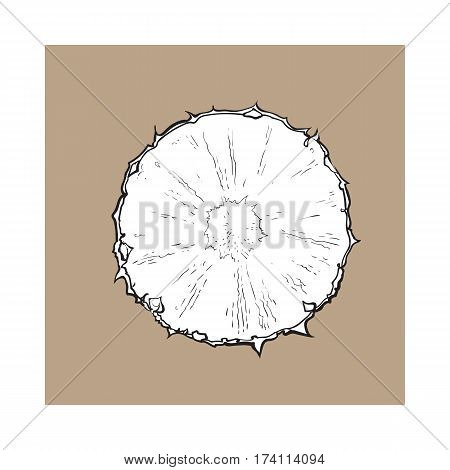 Unpeeled round pineapple slice, top view, sketch style vector illustration isolated on brown background. Realistic hand drawing of fresh, ripe pineapple slice, half pineapple