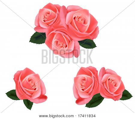 Beautiful pink roses with leaves isolated on the white background. Photo-realistic vector illustration.