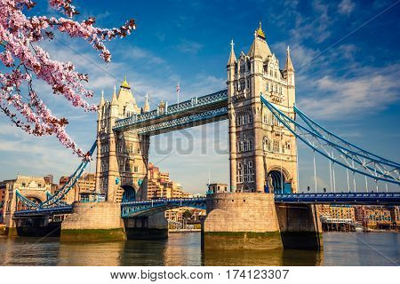 Tower bridge with cherry blossom, London