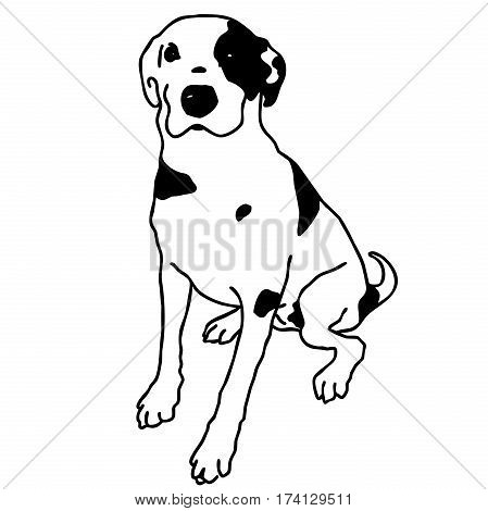 Vector black and white sitting dog. Smart and darling doggy. Man's best friend. Outlined cute dog. Crafty and sly doggie. Flatten isolated master illustration.