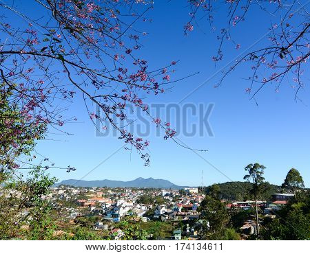 Cityscape Of Dalat, Vietnam