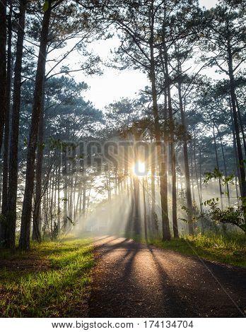 Landscape Of Forest In Dalat Highlands In Vietnam