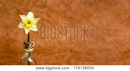 Website banner of a beautiful Easter flower in Spring