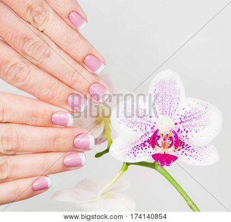 Closeup of female fingers with french spring manicured fingernails close to branch of beautiful orchid flowers isolated on white background. Painted with modern gel-polish with top cover.