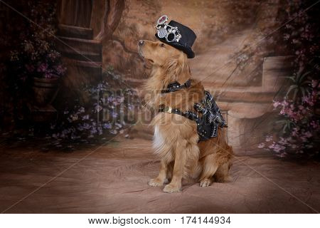 Golden Retriever dog clothes Steampunk outfit pistol hoses cylinders