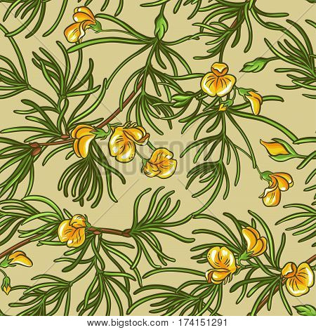 rooibos vector seamless pattern on color background