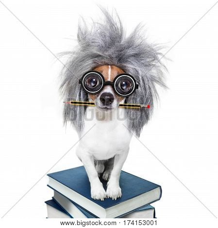 Intelligent Smart  Dog With Books