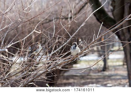 Birds in wildlife. View of beautiful bird which sits on a branch under sunlight landscape. Sunny amazing sparrow image.