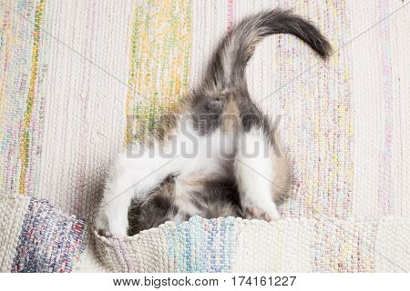 Cute kitten playing with the mat. Close-up