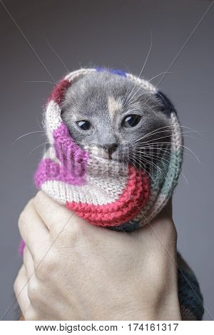 funny kitten held in the hand wrapped in a striped woolen scarf in preparation for the winter cold