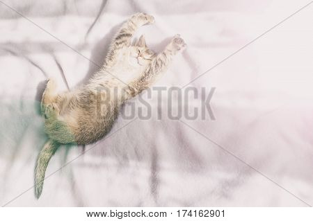 lovely cute kitten in bed in the rays of the morning sun