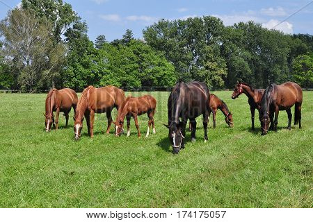 group of purebred horses on pasture here in Czech republic