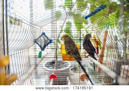 Two Colorful Parrots Sitting In The Birdcage