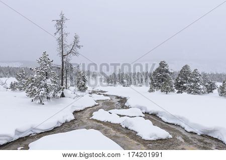 Yellowstone National Park in Winter on Snowy Day