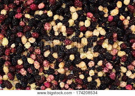 different kinds of wild mulberry. mulberry background.