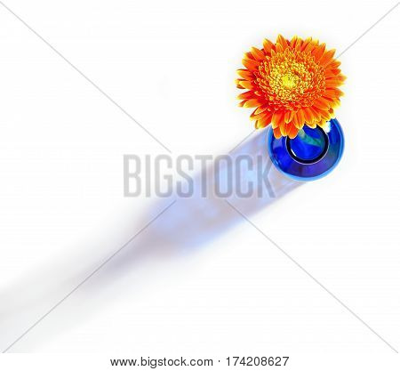 Top view of orange gerbera flower in blue bottle throwing a shadow on a white background