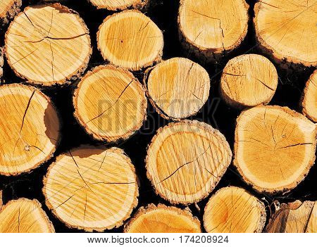 Pile of wooden logs. Good to use as natural background.