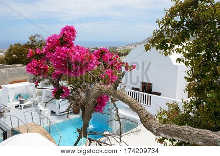 Building of hotel in traditional Greek style with Bougainvillea flowers Santorini island Greece