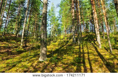 Forest Canopy Landscape. Bright Sun And Shadows Of Trees