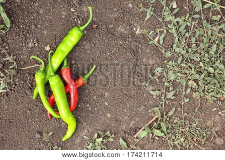 Green and red hot chili peppers lying on the ground
