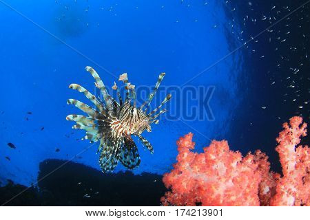 Lionfish fish on ocean coral reef