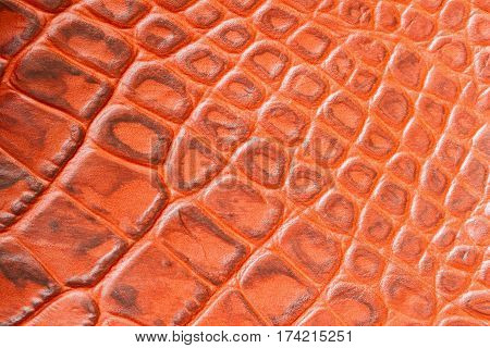 Texture of genuine leather close-up, embossed under the skin a orange brown crocodile, background