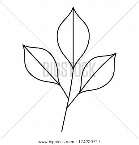 Three leafs icon. Outline illustration of three leafs vector icon for web