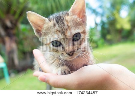 Small baby cat in female's hand. Summer garden background. Lovely kitty with transparent ears and curious eyes. Domestic kitten closeup photo portrait. Love and care concept image. Cat childhood