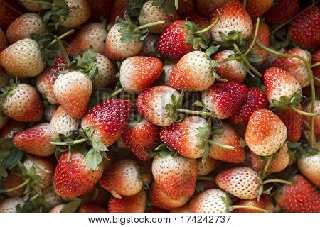 Fresh Ripe Perfect Strawberry - Food Frame Background. (Selective Focus)