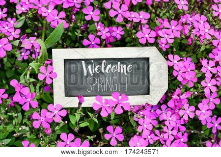 closeup of a label-shaped chalkboard with the text welcome spring written in it placed between many pink wildflowers