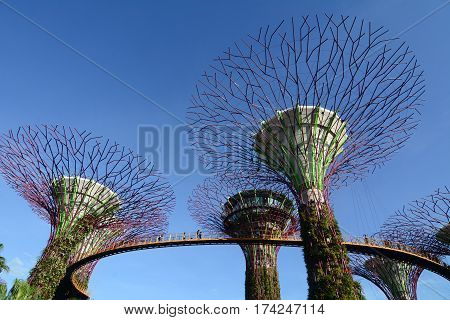 Supertree Grove In Singapore