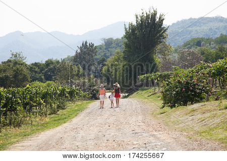 View of the Hua Hin hills vineyard in Thailand. On the way through the vineyard walk three tourists.