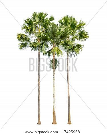 Isolated group of plam trees on white background
