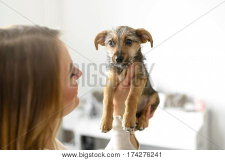 Young Woman Holding Her Puppy Dog