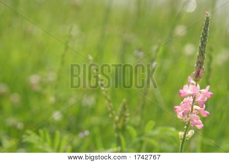Summer Panorama With Pink Flower