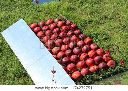 a lot of peaches, red fruit, peaches are in neat rows, peaches lie on the grass, abstraction of peaches, installation with peaches, nectarine, installation with peaches, nectarines lie on the grass in