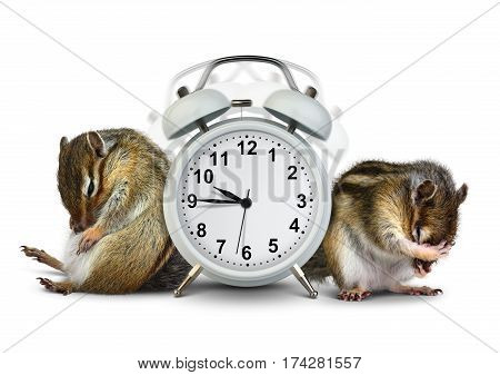 Funny animals chipmunks wakeup with ringing clock on white background
