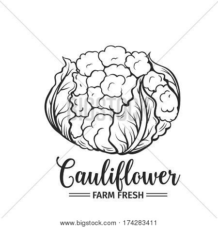 Hand drawn cauliflower icon. Vector badge vegetable in the old ink style for brochures, banner, restaurant menu and market