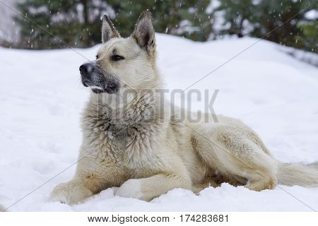 Pooch In The Winter, The Snow Sits And Grieves, Friendship