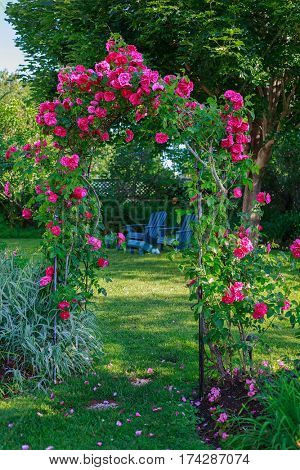 Rose arbor in a backyard garden.