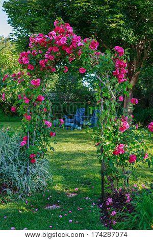 Rose arbor in a backyard garden.