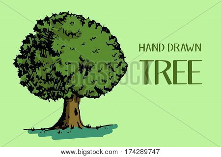 Tree with green leaves. Hand drawn vector stock illustration