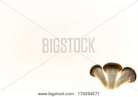 Background for mushroom, diet mushroom, menu mushroom flyers .Background for fungal pharmacies.