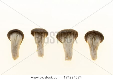 The collection of mushrooms on a white background, set of mushrooms closeup on a white background
