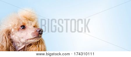Dog over blank posterboard, you add the message.